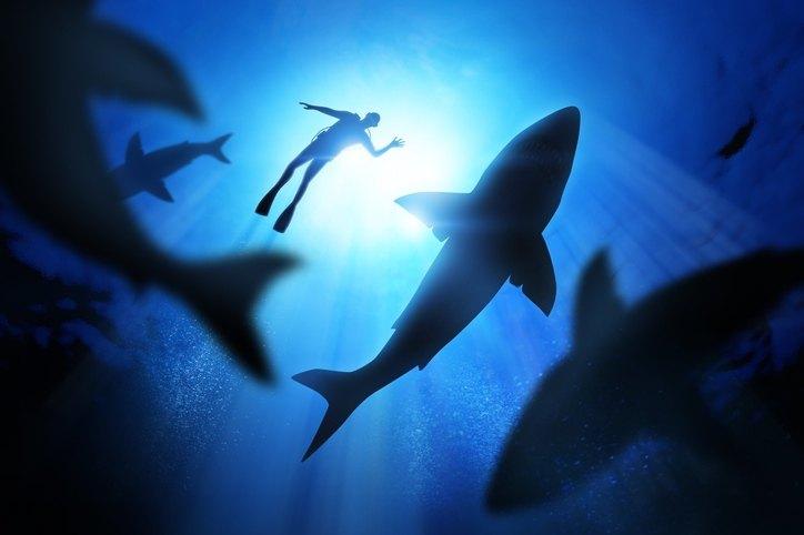 Ein Taucher und Haie