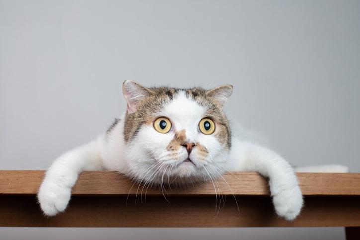 Contentcat mit großen Augen