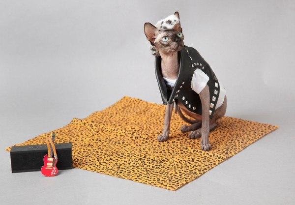 Katze ohne Fell sitzend auf Teppich mit Lederjacke