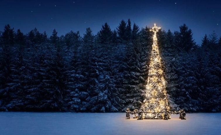 Ein Weihnachtsbaum mit leuchtenden Lichterketten steht draußen im Schnee vor anderen Tannenbäumen.