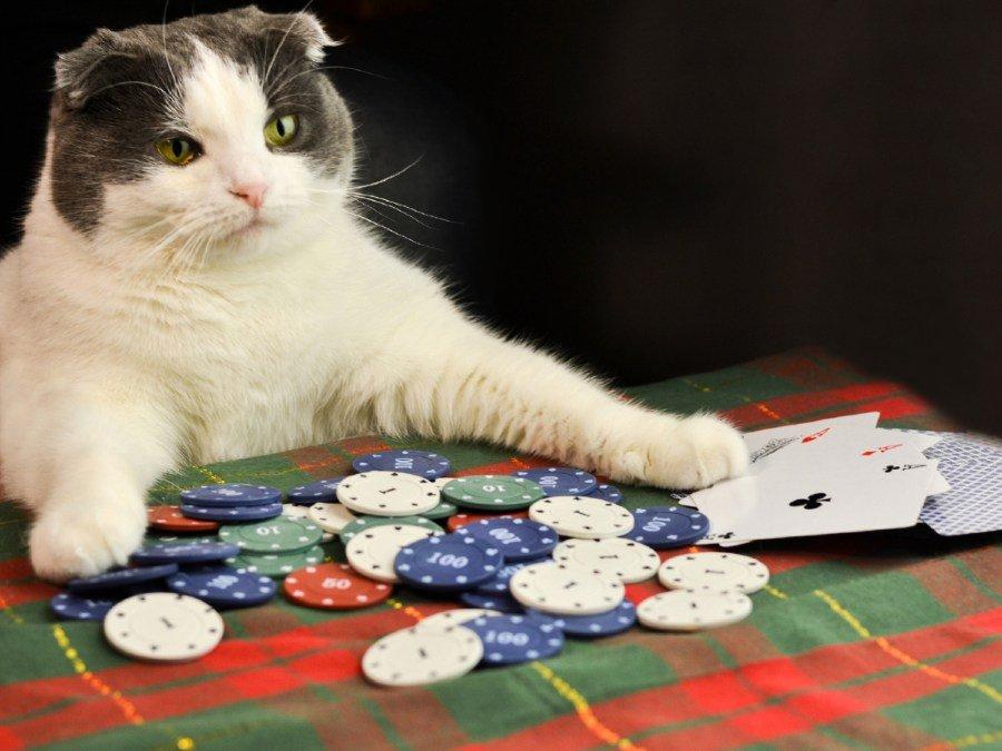 Katze sitzt am Casino Tisch