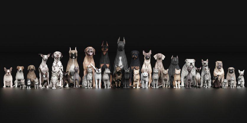 Community Hunde