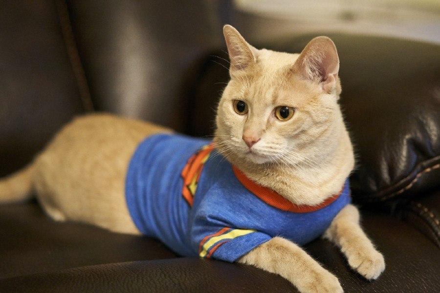 Katze liegend im Superhelden Kostüm