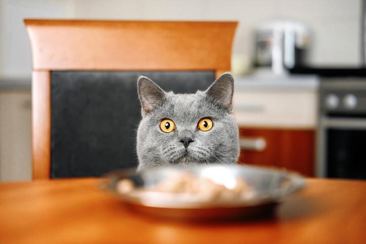 Katze schaut über den Tellerrand