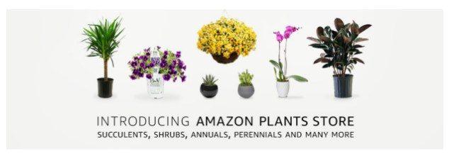 Amazon Pflanzen Store