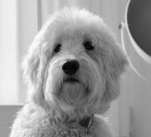 Mitarbeiterfoto von Hund Liselotte in Schwarz-Weiß