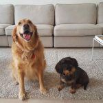Foto von den zwei Hunden Luzi und Martha