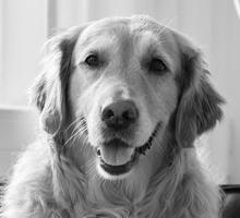 Mitarbeiterfoto von Bürohund Luzie in Schwarz-Weiß