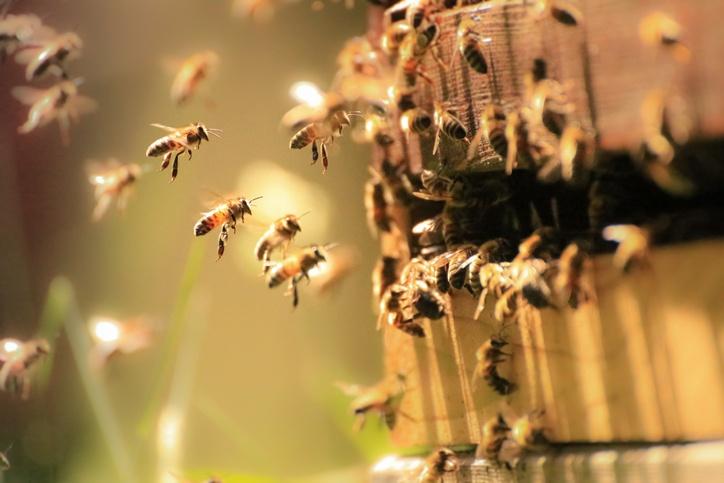 Honigbienen bei der Arbeit als Beispiel für Pillar Pages