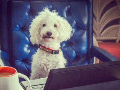 Ein Hund sitzt an einem Schreibtisch