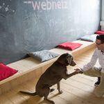 Hund Elli gibt Kai in der Tafelecke Pfötchen